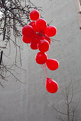 Red Balloons stuck in tree - p956m1104112 by Anna Quinn