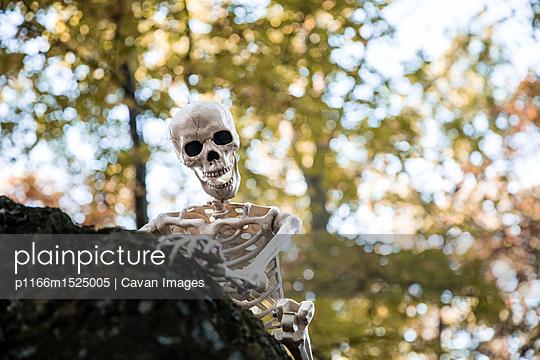 p1166m1525005 von Cavan Images
