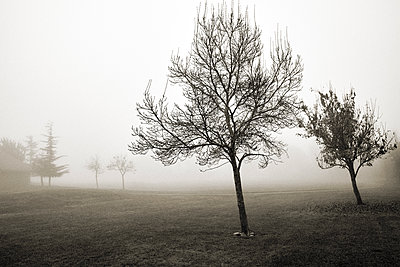 Trees In Fog - p1489m1575415 by Paul Simcock