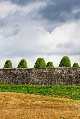 Formschnitt hinter Mauer - p248m933288 von BY