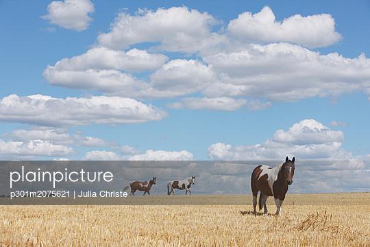 p301m2075621 von Julia Christe