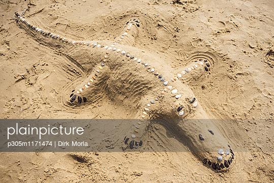 Krokodil am Strand - p305m1171474 von Dirk Morla