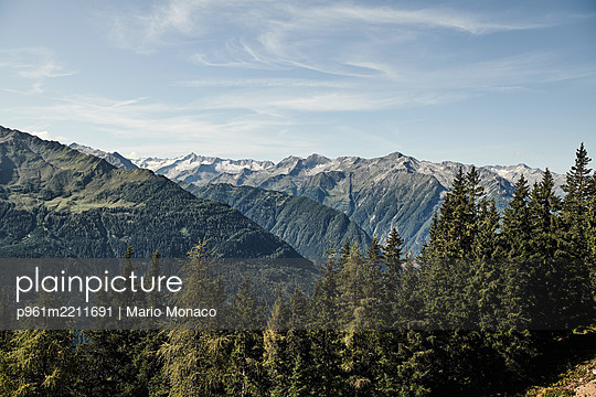 Coniferous forest against mountain landscape, Pinzgau - p961m2211691 by Mario Monaco