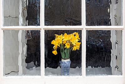 Blumenstrauß auf dem Fensterbrett - p1057m1220626 von Stephen Shepherd