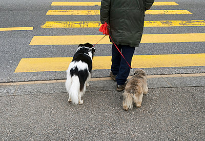 Crossing road with dogs - p1072m941452 by Saturno Dona