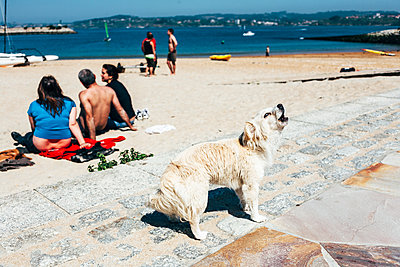 Barking dog on the beach - p1085m1426002 by David Carreno Hansen