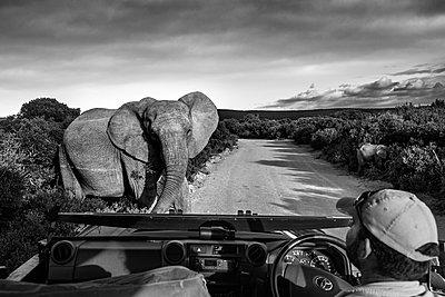 Gorah South Africa Elephant Camp  - p1171m1143951 by SimonPuschmann