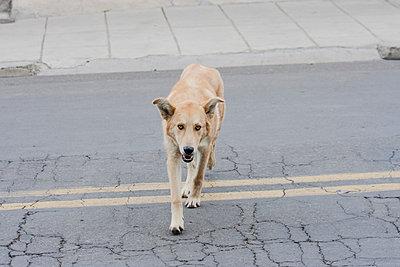 Straßenhund  - p1357m1222149 von Amadeus Waldner