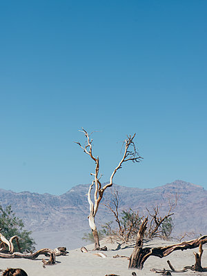 Death Valley - p1507m2020560 by Emma Grann