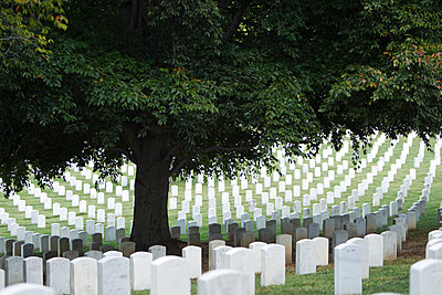 Tree shading headstones in military cemetery, Arlington, Virginia, United States - p555m1419854 by Jeff Greenough