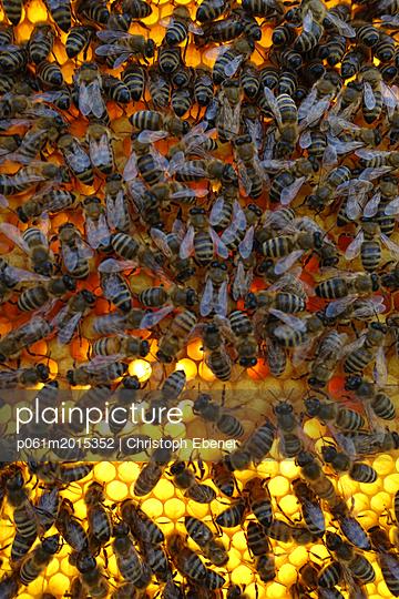 Bienen auf Brutwabe - p061m2015352 von Christoph Ebener
