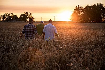 Caucasian men walking though field of wheat - p555m1522994 by John Fedele