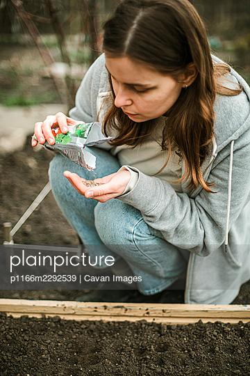 Woman sowing seeds in a vegetable bed - p1166m2292539 by Cavan Images