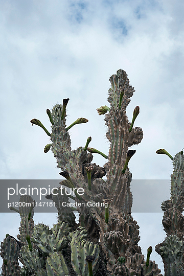Kaktus - p1200m1147181 von Carsten Görling