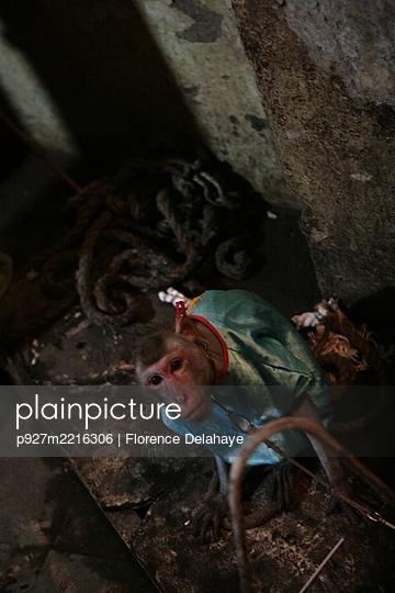 One monkey waiting, Hanoï Circus - p927m2216306 by Florence Delahaye