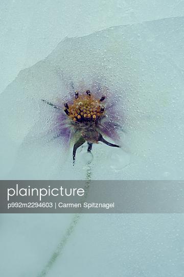 p992m2294603 by Carmen Spitznagel