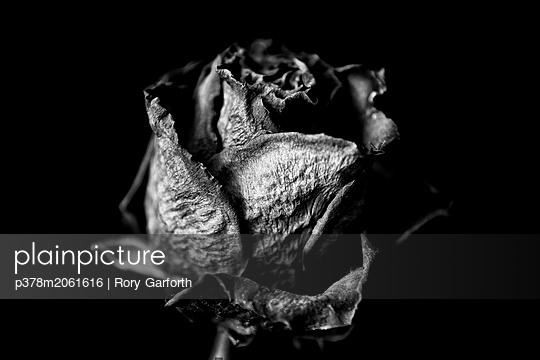 p378m2061616 von Rory Garforth