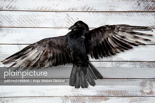 p451m2185846 by Anja Weber-Decker