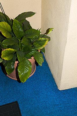 Zimmerpflanze - p1094m890273 von Patrick Strattner