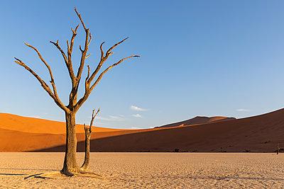 Africa, Namibia, Namib-Naukluft National Park, Deadvlei, dead acacia tree in clay pan - p300m2023555 von Fotofeeling