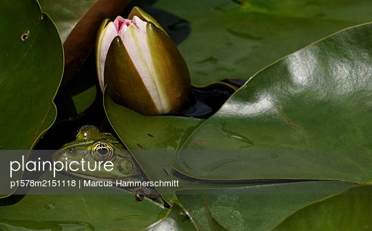 Gut versteckt - p1578m2151118 von Marcus Hammerschmitt