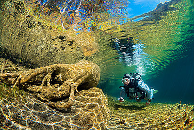 Austria, Tyrol, Lake Fernsteinsee, tree under water with a diver - p300m1459912 by Gerald Nowak