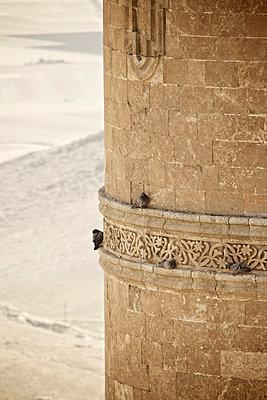 Tauben an der Festungsmauer, Mardin, Türkei - p586m971384 von Kniel Synnatzschke