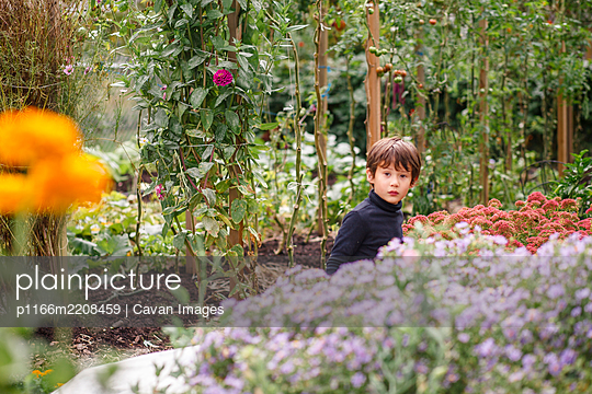 A small beautiful boy peers out above a row of flowers in a garden - p1166m2208459 by Cavan Images