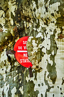 Road sign ingrown into the bark of a tree - p1312m2178212 by Axel Killian