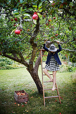 Girl picking apples - p312m2092028 by Anna Kern