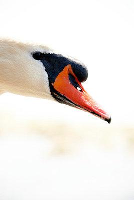 Swan - p5870168 by Spitta + Hellwig
