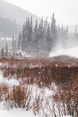 Snow at Guanella Pass - p1262m1194788 by Maryanne Gobble