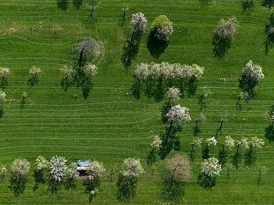 Aerial view rural green field and trees, Hohenheim, Baden-Wuerttemberg, Germany - p301m2017087 by Stephan Zirwes