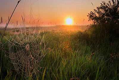 Sunrise on a dew-covered cattle pasture with spider web in central Alberta - p6070670 by Dan Jurak