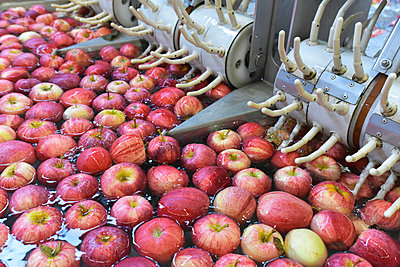 Conveyor belt with apples in water - p300m2144398 by lyzs