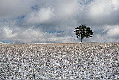 Winter - p829m949350 von Régis Domergue