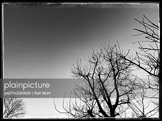 Bare trees - p427m2260620 by Ralf Mohr