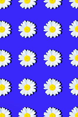 Marguerites - p1149m2187949 by Yvonne Röder
