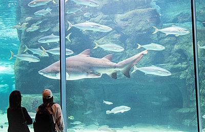 Two Oceans Aquarium, visitors marvel at sea animals - p1640m2246212 by Holly & John