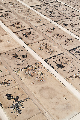 USA, Aerial photograph of Beef Cattle feed lot near Greeley, Colorado - p300m2023553 by Cameron Davidson