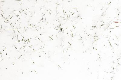 Grashalme im Schnee - p212m901000 von Edith M. Balk
