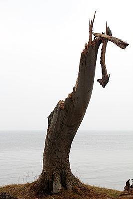 Tree by ocean - p039m1492672 by Christine Höfelmeyer