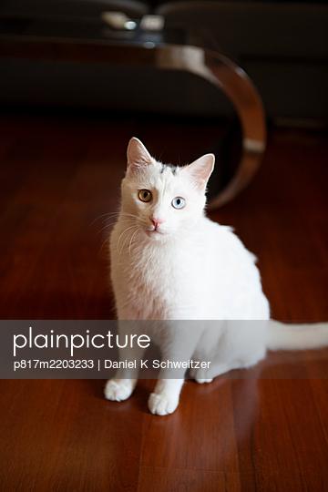 White cat - p817m2203233 by Daniel K Schweitzer