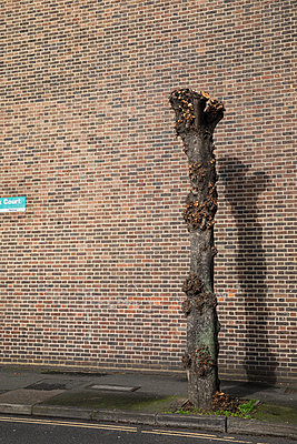 Tree trunk against brick wall - p1291m2172074 by Marcus Bastel