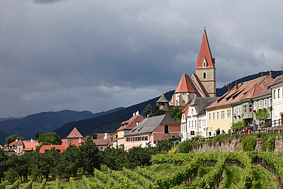 Austria, Lower Austria, Wachau, Weissenkirchen in der Wachau, View of town with vineyard in foreground - p30020006f by Martin Siepmann