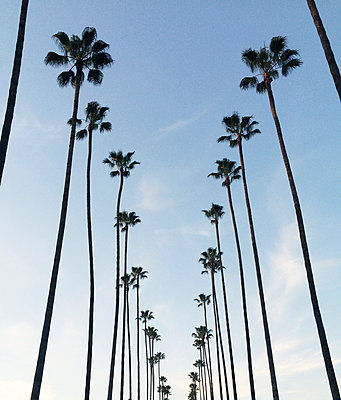 Low angle view of palms against sky - p1166m1070741f by Elizabeth Eisenstein
