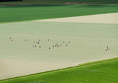 People working on a field - p429m1047196 by Mischa Keijser