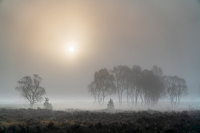 A misty autumn sunrise over Strensall Common Nature reserve near York, North Yorkshire, Yorkshire, England, United Kingdom - p871m2074385 by John Potter