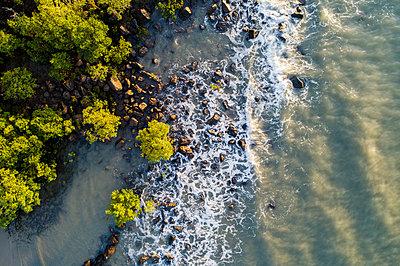 Australia, Queensland, Port Douglas, Aerial view of coastline with mangroves trees (Rhizophora) - p1427m1553667 by WalkerPod Images