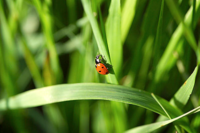 Ladybird - p4091087 by Peter Weihs